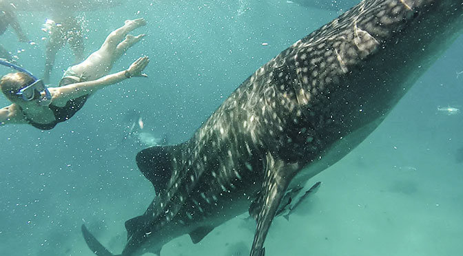 laura with whale shark